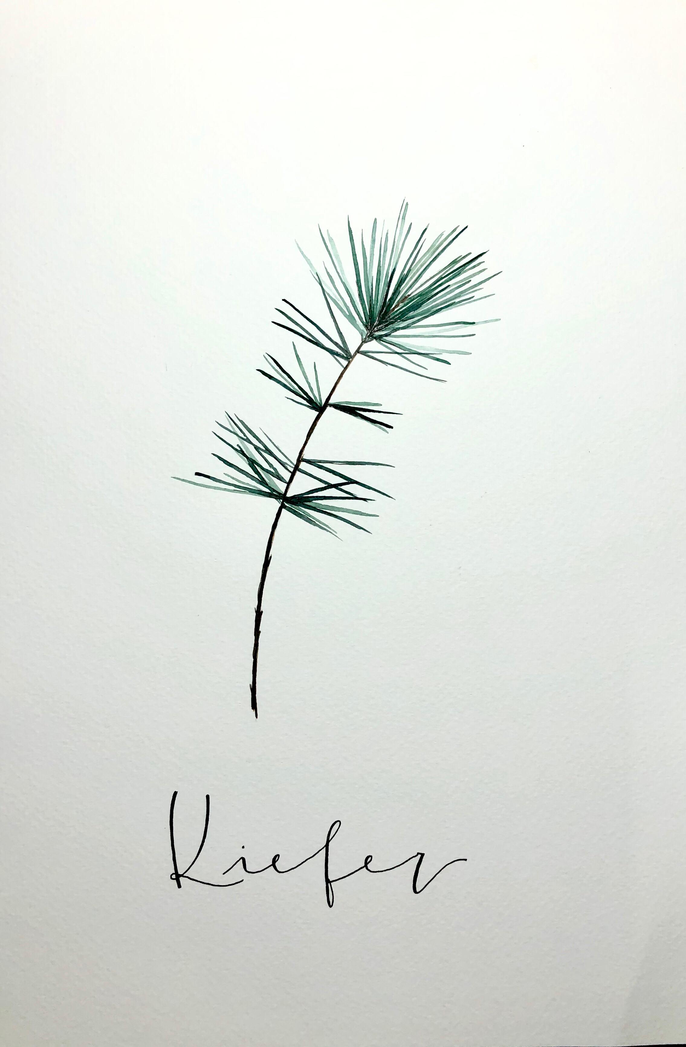 Kalligrafie von ©Anna Bösch